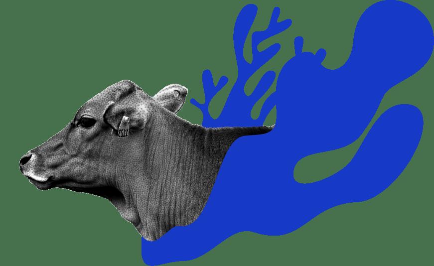 cow-image